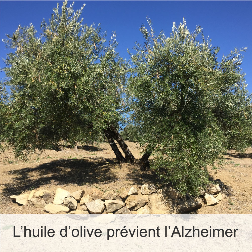 Alzheimer-Bienfaits-Huiles d'Olive Arsélia-Carousel
